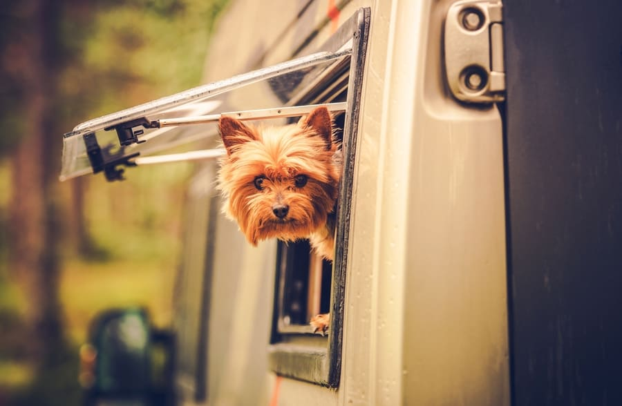 dog in pop up camper